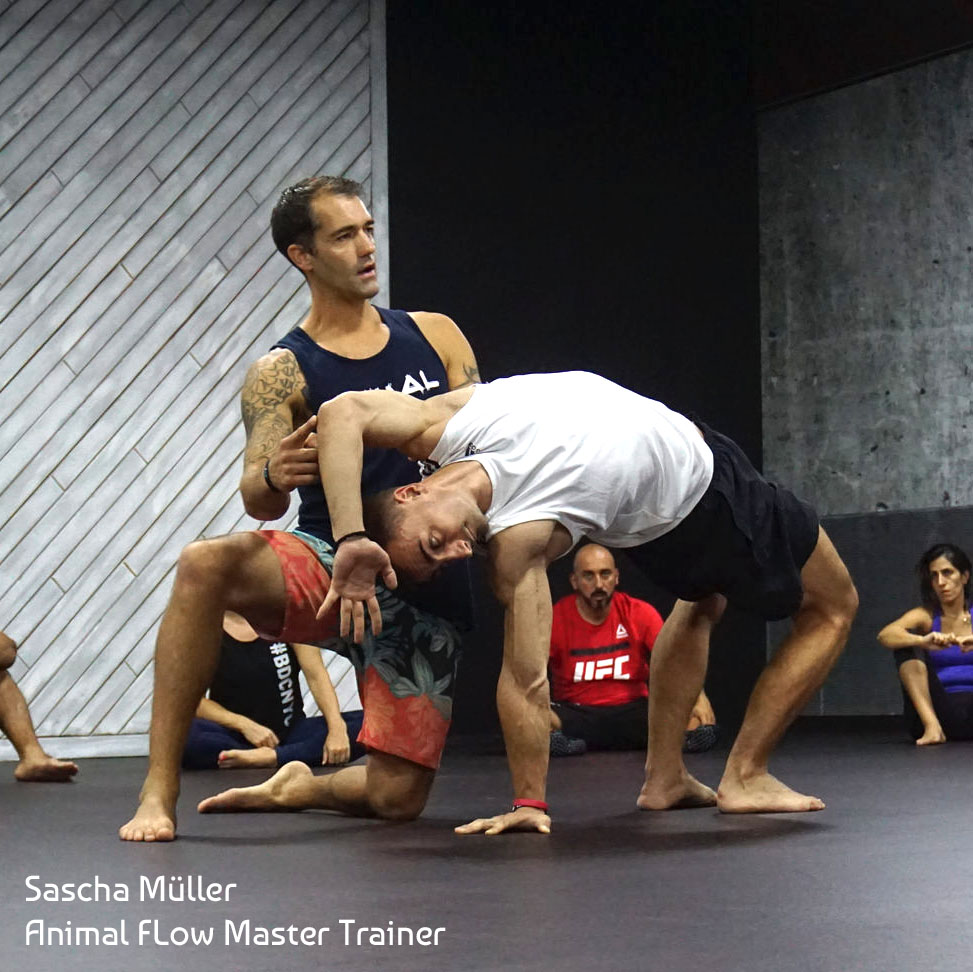 Sascha Müller - Teaching Animal Flow